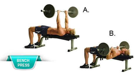 muscle groups used in bench press 5 best compound lifts for lean muscle aussie protein