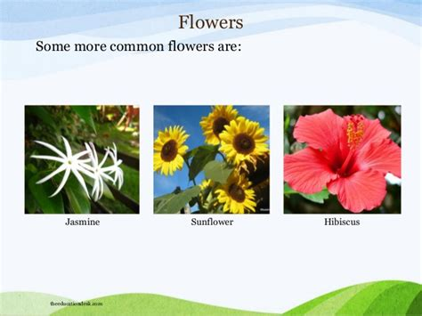 list of flower names with scientific name family and pictures list of scientific names indian flowers thin blog