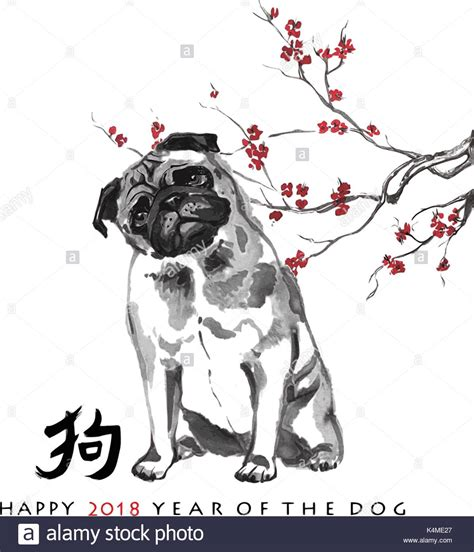 8 year pug greeting card new year pug and a branch of cherry blossom stock vector