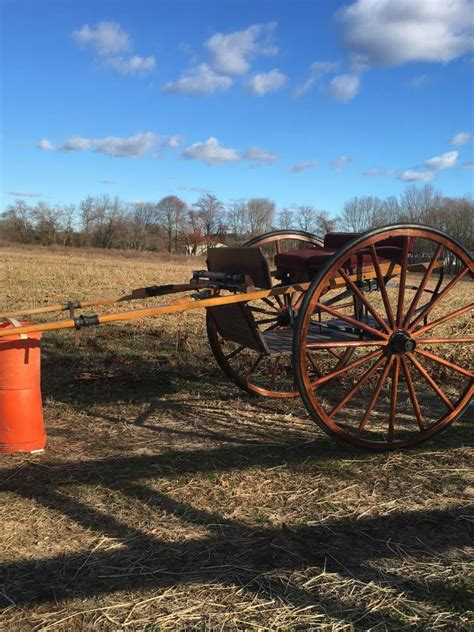 carriage driving carriages  sale horse carriages horse  buggy wedding carriages