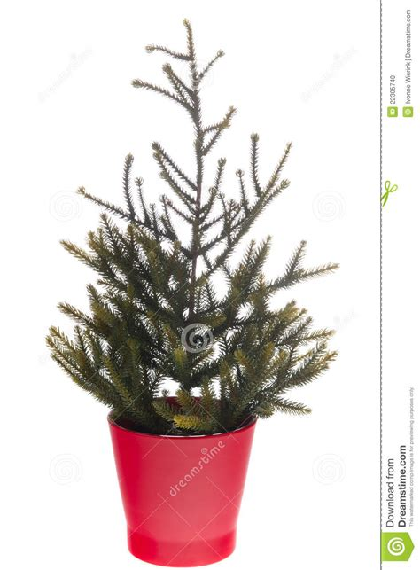 empty christmas tree stock photo image 22305740