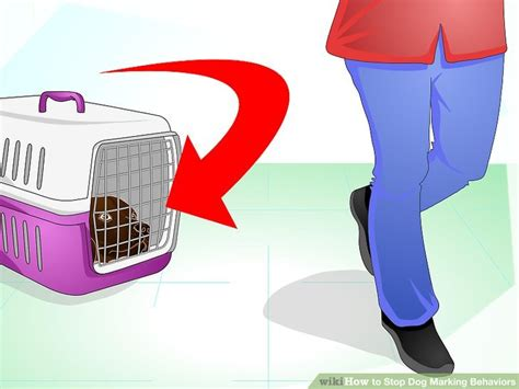 how to stop a dog from marking inside the house how to stop dog marking behaviors with pictures wikihow