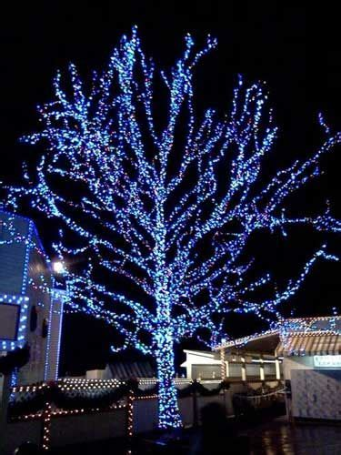 evergreen tree light wrap how to wrap a tree with lights lights and