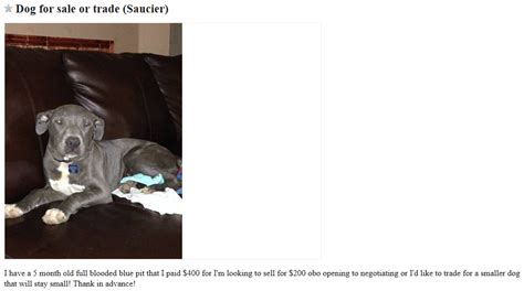 craigslist for dogs craigslist dogs for trade puppy leaks