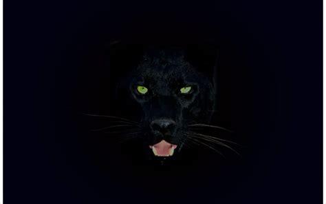 black panther animal desktop wallpaper black panther wallpapers wallpaper cave