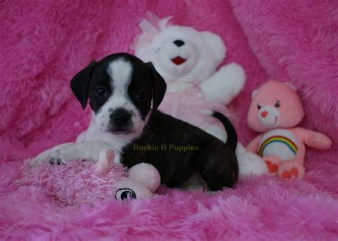 boggle puppies dimples boggle rockin r puppies