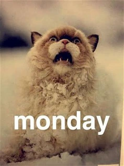 Monday Cat Meme - 7 ways to get happier now cats mondays and memes