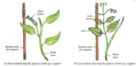 tropic movements in plants and coordination in plants