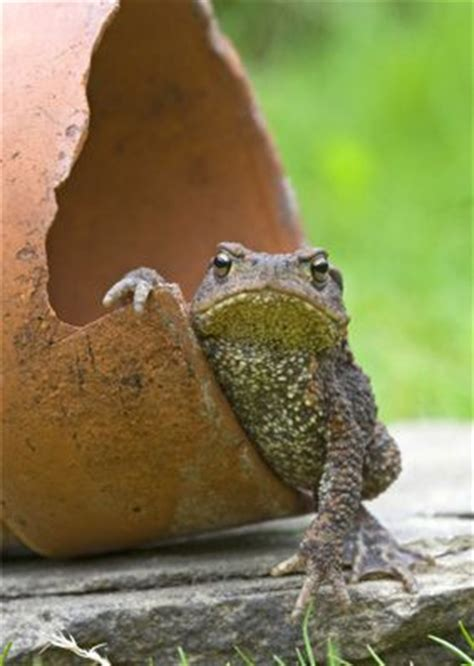 How To Find Frogs In Your Backyard by 17 Best Ideas About Toad House On Frog House