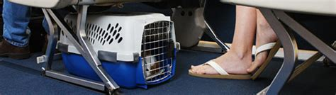 United Airlines In Cabin Pet Policy by Pets On A Plane Where Should They Ride Washingtonpost