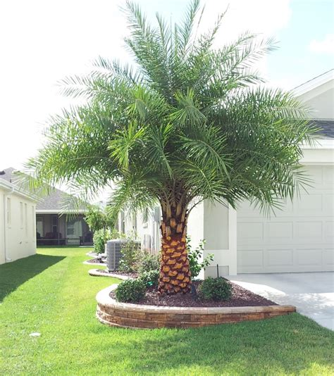 palm tree landscaping ideas focal 9 palm trees for
