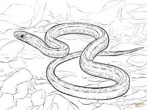 Snake Coloring Pages  GetColoringPagescom sketch template