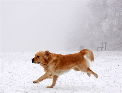 running dogs running pictures freaking news