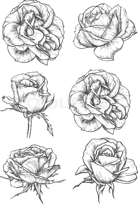 blooming rose tattoo designs blooming sketches of luxurious flower and tight bud