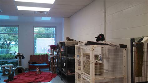 animal house huntley ultimate cat shelter makeover finalists time to vote hauspanther