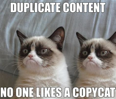 Copy Cat Meme - 15 seo tips and tricks to improve your content marketing