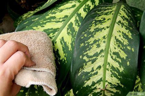 pflanzen gegen staub pflanzen richtig pflegen wikihow