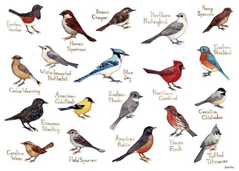 blog with great painting chart of the song birds of nc