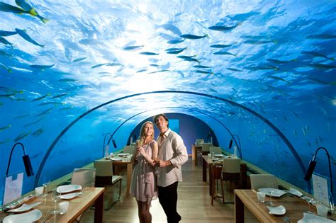 ithaa undersea restaurant ithaa the underwater restaurant in the maldives
