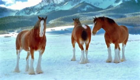 clydesdale horses in snow wallpaper