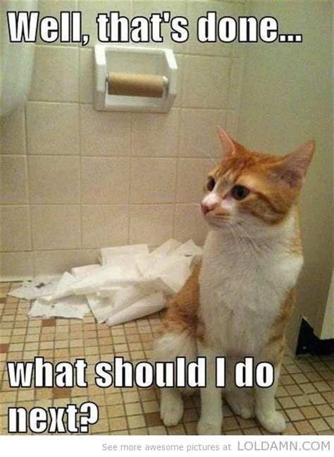Funny Toilet Memes - 20 funny cats play with toilet paper make you laugh