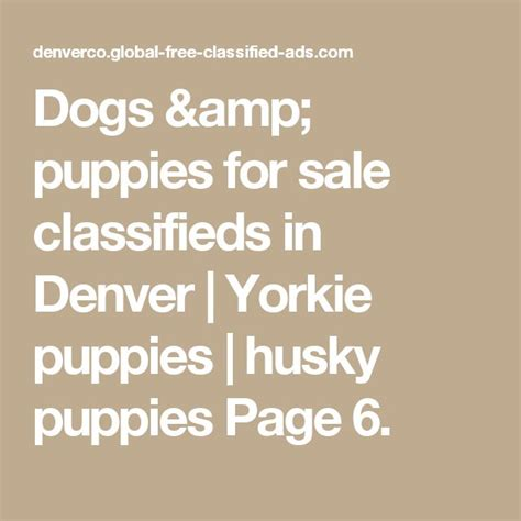 yorkie puppies for sale in denver 25 best ideas about huskies for sale on pomsky for sale puppies