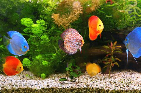 aquarium archives hewanid
