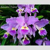 orquideas-plantas