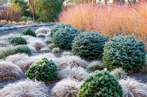 Winter Garden by Richard Bloom Garden Photographer S Association