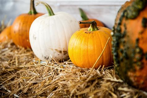 how to preserve pumpkins until how to keep your pumpkins happy from now until