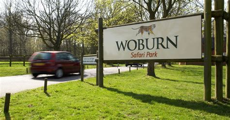discount vouchers woburn safari park woburn safari park fire kills 13 patas monkeys after blaze