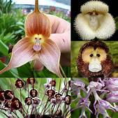 Orchids that lo...