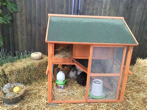 How To Build A Chook Shed by Chook Shed Design How Shed Plans Can Enhance Your