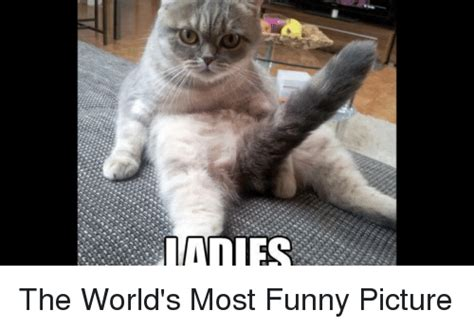 Funniest Meme In The World - adies the world s most funny picture funny meme on sizzle