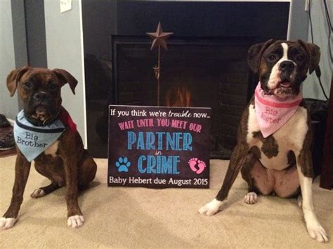 baby announcements with dogs 17 best ideas about chalkboard pregnancy announcements on chalkboard