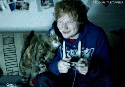 ed sheeran cats ed sheeran cat tumblr