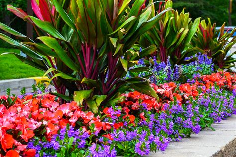 tropical plants for sale in florida projects tropical plants for sale tropical plants
