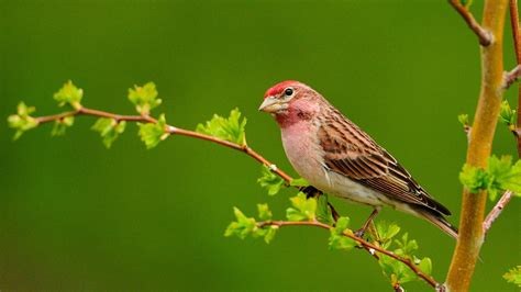 Pictures of cute birds my free wallpapers hub