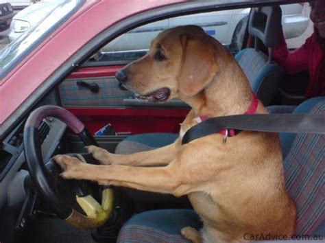 driving dogs 6 creative and costume ideas for your