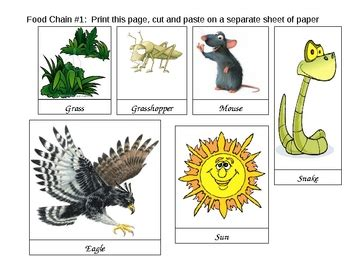 food chain template cards food web and food chain card activity by scienceville tpt