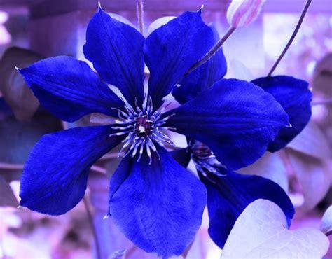 fiori color indaco indaco colore