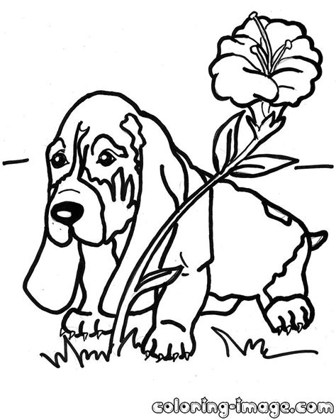 basset hound puppy with a flower free coloring pages for