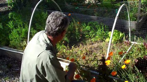 hoop frame  bird netting youtube