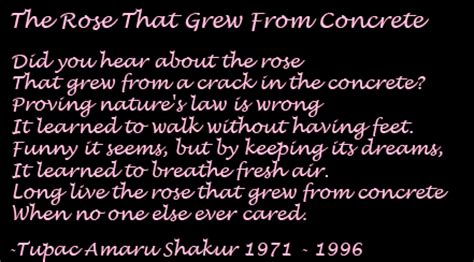 the rose that grew from concrete 2pac tupac shakur