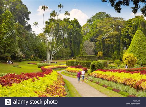 Kandy Botanical Gardens Sri Lanka Kandy Peradeniya Botanic Garden Stock Photo Royalty Free Image 90529781 Alamy
