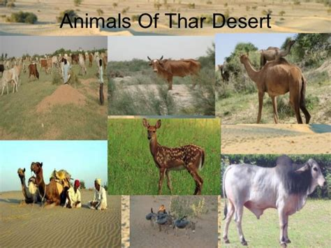 thar desert animals thar desert
