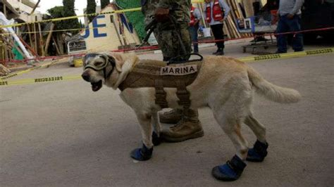 frida the rescue meet frida the rescue who emerged as of mexican earthquake news