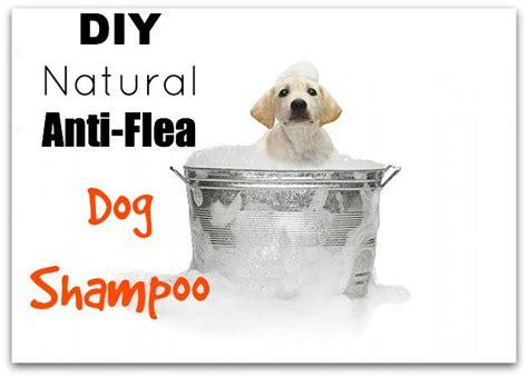 make bathtime fun for your dog dog bath tubs dog care tips affordable flying pig