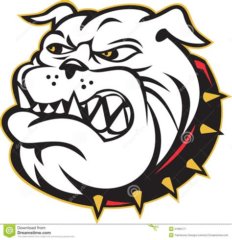 bulldog mongrel dog head angry royalty free stock