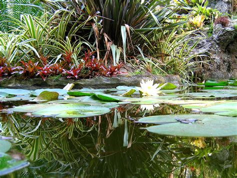 giardini ischia giardini la mortella il paradiso segreto dell isola di